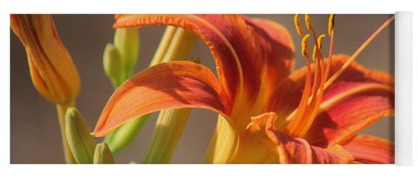 Day Lilies In The Wild 3 Yoga Mat