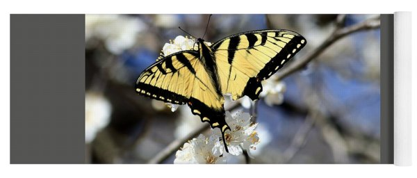 De-tailed Swallowtail Yoga Mat