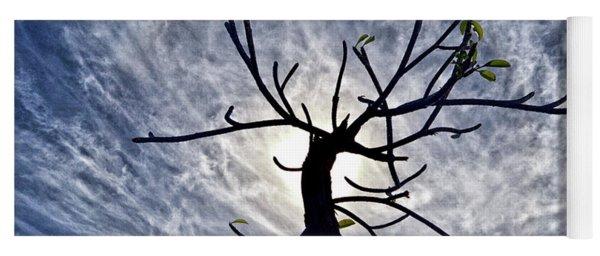 Dead Tree In St. Johns Antigua Yoga Mat