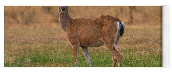 Deer At Sunset Yoga Mat