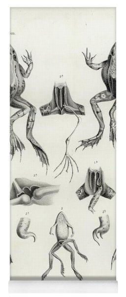 Deformed Frogs - Historic Yoga Mat