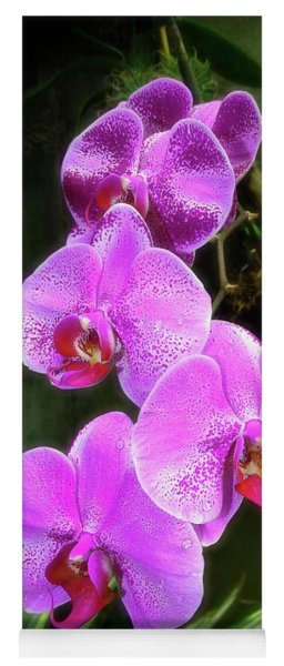 Dew-kissed Moth Orchids Yoga Mat