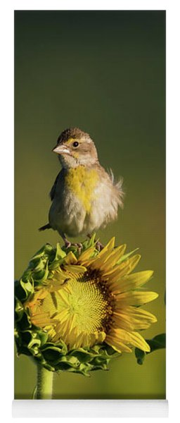 Yoga Mat featuring the photograph Dickcissel Sunflower by Andrea Silies