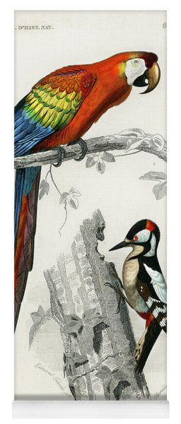 Different Types Of Birds Yoga Mat