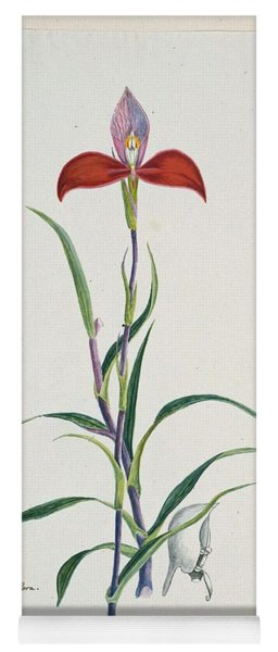 Disa Uniflora Bergius Red Disa Or Pride Of Table Mountain, Robert Jacob Gordon, 1777 - 1786 Yoga Mat