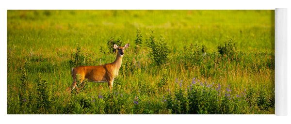 Whitetail Doe In Prairie Clover Yoga Mat