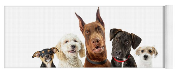 Dogs Of Various Sizes Close-up Web Banner Yoga Mat