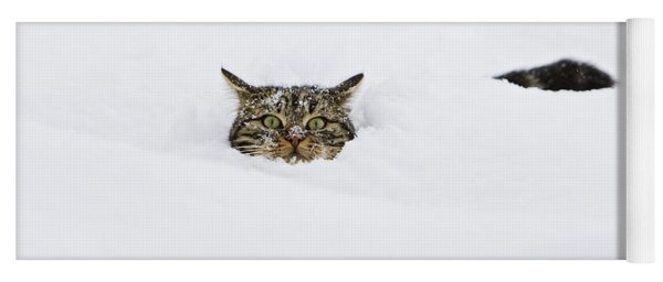 Domestic Cat Felis Catus In Deep Snow Yoga Mat