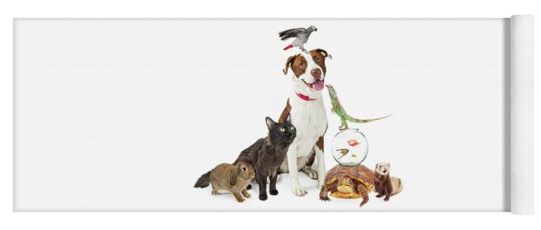 Domestic Pets Group Together With Copy Space Yoga Mat
