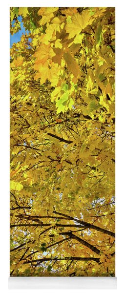 Douglas Maple In Autumn Yoga Mat