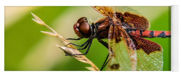 Dragonfly Resting On Grass Seed Yoga Mat