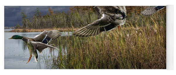 Drake Mallard Ducks Coming In For A Landing Yoga Mat