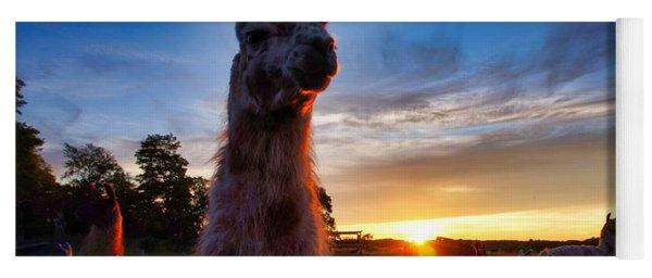 Drama Llamas Yoga Mat