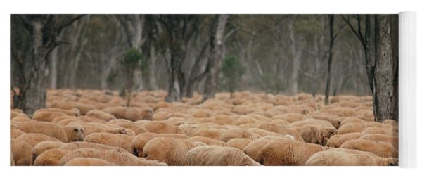 Droving Sheep  At Albert Australia Yoga Mat