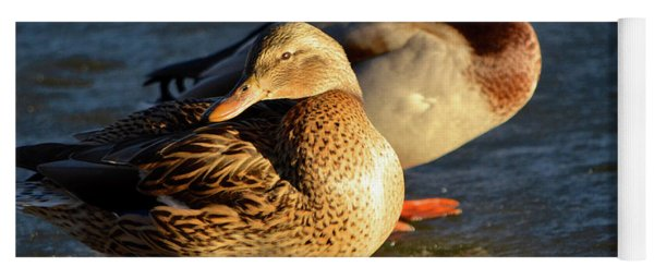 Duck Pair Sunbathing On Frozen Lake Yoga Mat