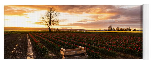 Dusk Golden Light In The Tulip Fields Yoga Mat