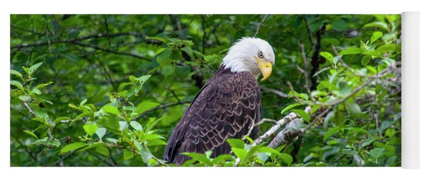 Eagle In The Tree Yoga Mat
