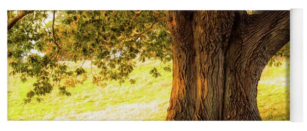 Early Autumn Oak Yoga Mat