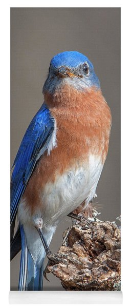 Eastern Bluebird Dsb0300 Yoga Mat