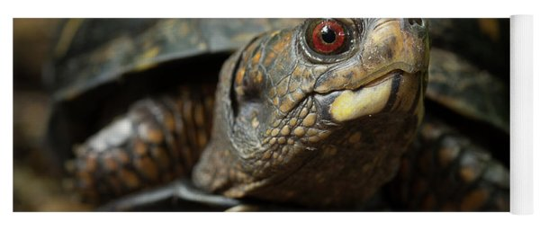 Eastern Box Turtle 4 Yoga Mat