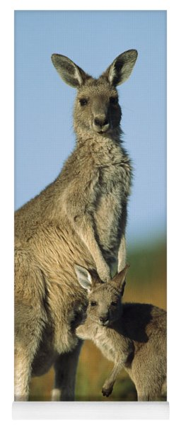 Yoga Mat featuring the photograph Eastern Grey Kangaroo And Her Joey by Ingo Arndt