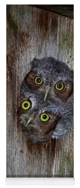 Eastern Screech Owl Chicks Yoga Mat
