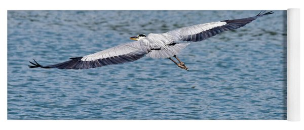 Great Blue Heron In Flight Yoga Mat