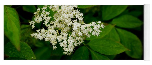 Elderflowers. One. Yoga Mat