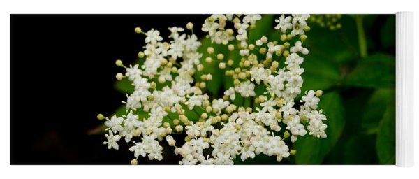 Elderflowers. Two. Yoga Mat