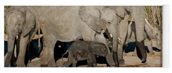 Elephant 3 Yoga Mat