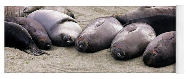 Elephant Seals Yoga Mat