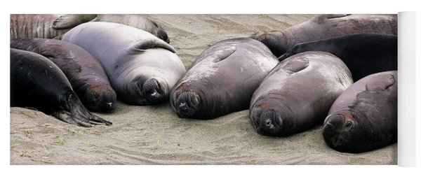 Elephant Seals Yoga Mat