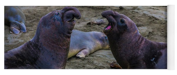 Elephant Seals Challenging Each Other Yoga Mat