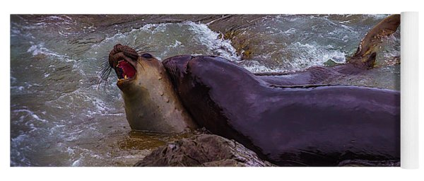 Elephant Seals Fighting In The Water Yoga Mat