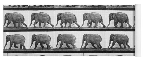 Elephant Walking Yoga Mat