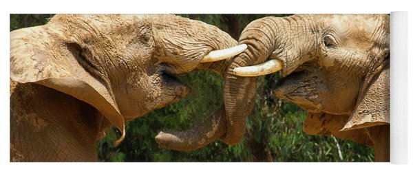Elephants Playing  Yoga Mat
