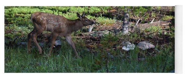 Baby Elk Rmnp Co Yoga Mat