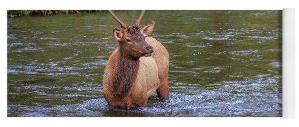 Elk In The Stream 3 Yoga Mat