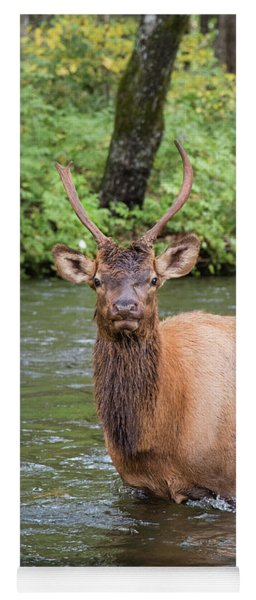 Elks Wading The Oconaluftee River Yoga Mat