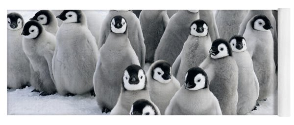 Yoga Mat featuring the photograph Emperor Penguin Chicks by Jan Vermeer