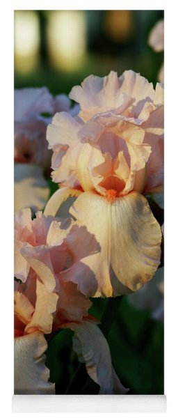 End Of Day Pink Irises 6702 H_2 Yoga Mat