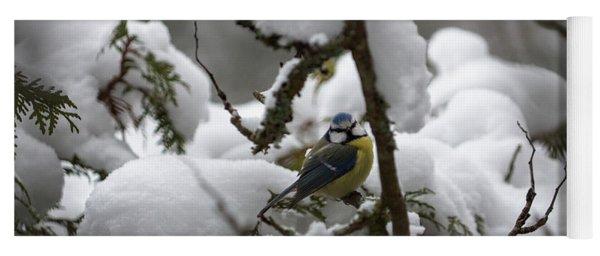 Eurasian Blue Tit In Winter 22 Yoga Mat
