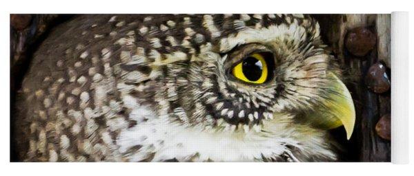 Eurasian Pygmy Owl In Profile Yoga Mat