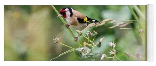European Goldfinch Perched On Flower Stem B Yoga Mat