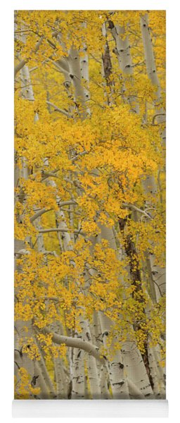 Fall Aspen Grove Yoga Mat