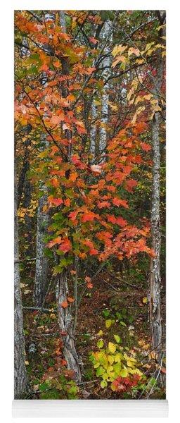Fall Color At Gladwin 4543 Yoga Mat