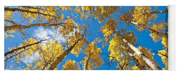 Fall Colored Aspens In The Inner Basin Yoga Mat