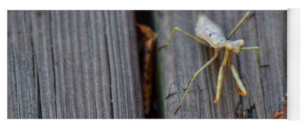 Fall Mantis  Yoga Mat