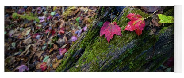 Yoga Mat featuring the photograph Fallen Leaves On The Limberlost Trail by Lori Coleman