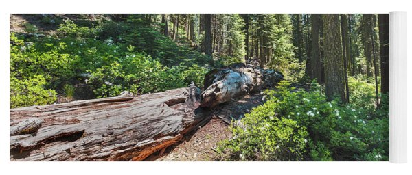 Fallen Tree- Yoga Mat